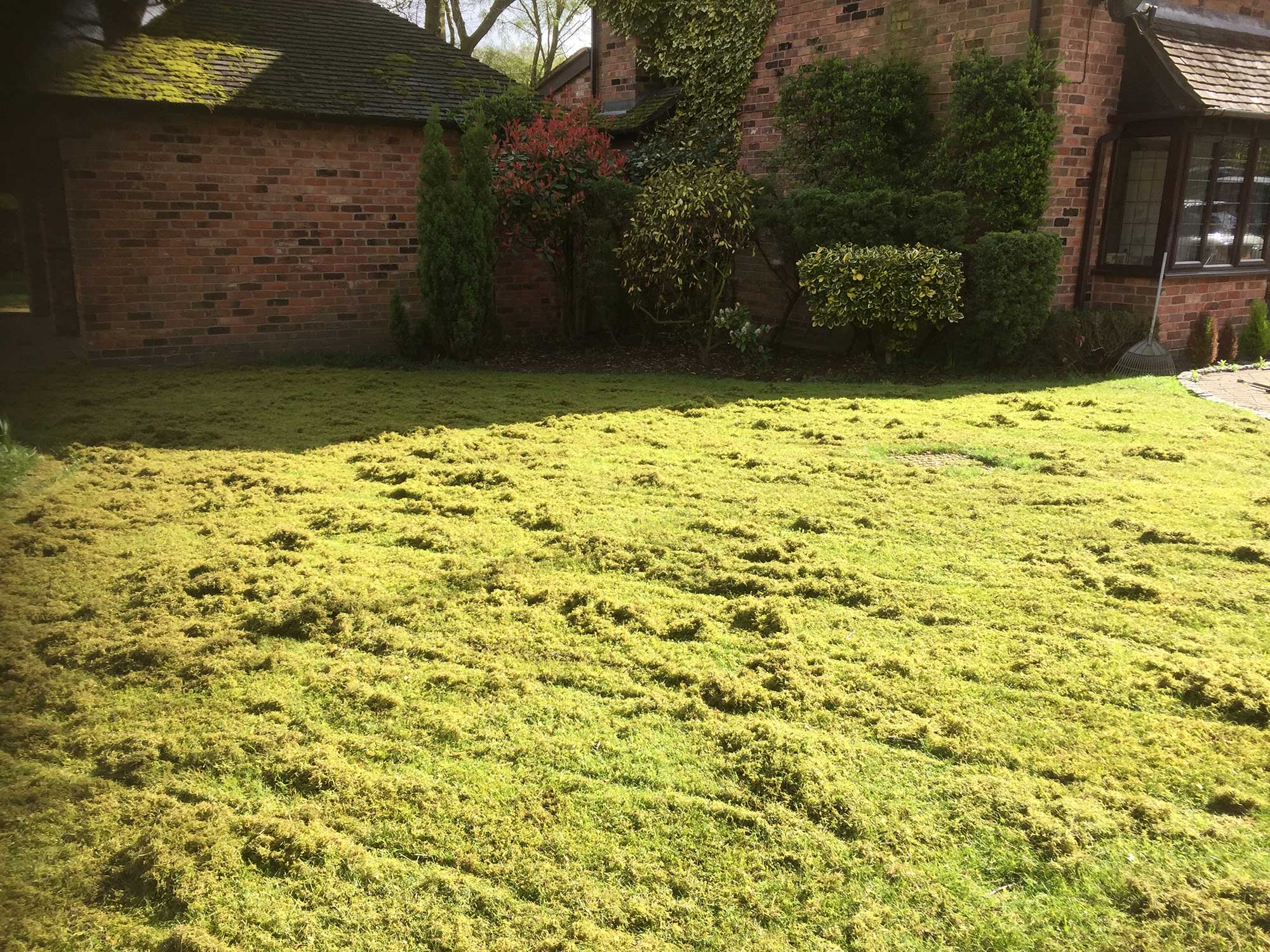 Lawn Scarification 1