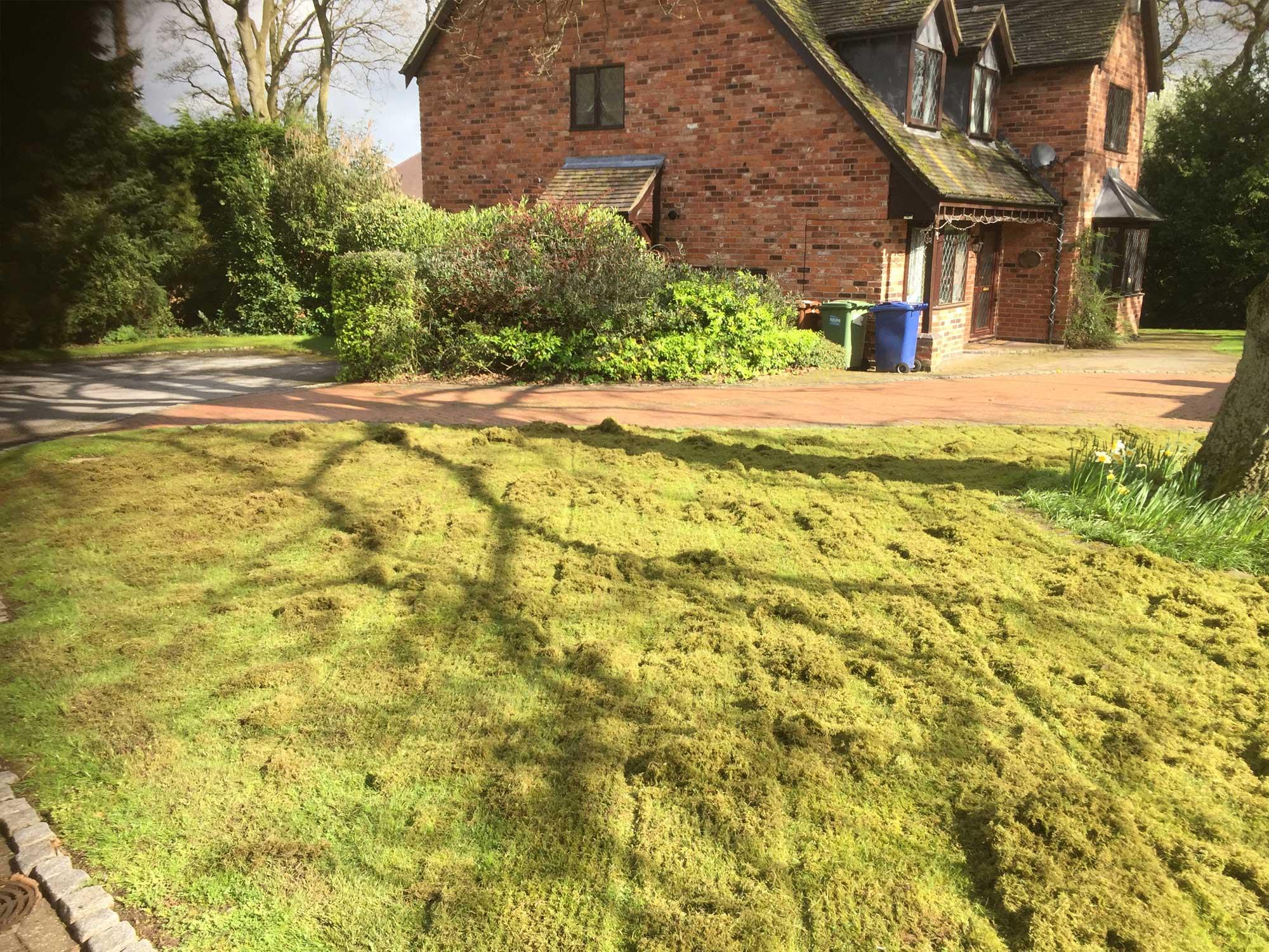 Lawn Scarification 3